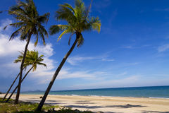 Große und kleine Kokosnuss Stockbilder