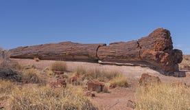 Große versteinert melden die Wüste an stockfotografie