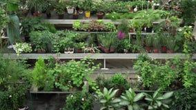 Große Vielzahl von Anlagen und von Blumen nach innen des botanischen grünen Hauses Schöne Orangerie voll von dekorativen, seltene stock video footage