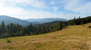 Große Waldlichtung in den Bergen Blauer Himmel auf dem Hintergrund Stockfoto