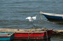 Große weiße Reiherlandung auf Boot lizenzfreie stockbilder