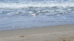 Große Wellen auf der Küste stock video