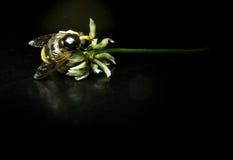 Große Wespe auf einer Blume mit schwarzem Hintergrund Stockfotografie