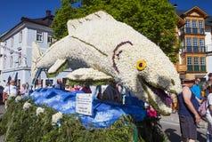 Große Zahlen von Narzissen, die in den Alpenwiesen wachsen, Schwimmen im See Festival Narzissenfest lizenzfreie stockbilder