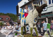 Große Zahlen von Narzissen, die in den Alpenwiesen wachsen, Schwimmen im See Festival Narzissenfest stockfoto