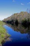Große Zypresse-nationale Konserve Lizenzfreie Stockfotografie