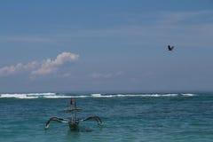 Großer Adler im Himmel über dem Meer und dem Boot Stockfoto