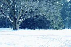 Großer alter Baum Stockfotografie