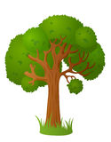 Großer alter Baum Lizenzfreie Stockbilder