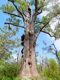 Großer alter Baum Lizenzfreies Stockbild