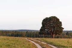 Großer alter Baum in einer Feldlandstraße Stockfotografie