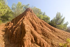Großer Ameisenhaufen Stockfotos