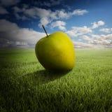 Großer Apfel auf dem Feld Stockbild
