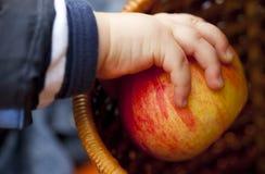 Großer Apfel auf der Hand des Babys Stockbilder
