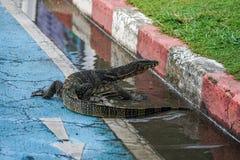 Großer asiatischer Wassermonitor auf überschwemmter Straße Stockbild