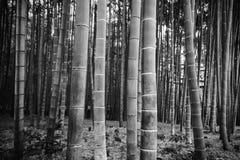 großer Bambus mit Schwarzweiss-Prozess Stockfotos
