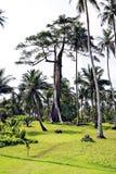 Großer Baum Stockfotografie