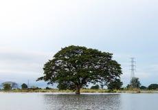 Großer Baum allein auf dem Wasser Stockbild