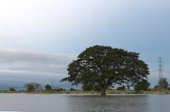 Großer Baum allein auf dem Wasser Lizenzfreie Stockfotos