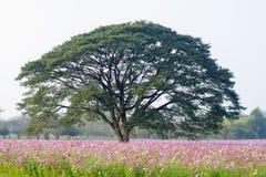 Großer Baum auf dem Kosmosgebiet Stockfotos