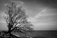 Großer Baum auf dem Strand Lizenzfreie Stockbilder