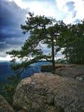 großer Baum auf der Klippe und dem blauen Himmel lizenzfreie stockfotografie