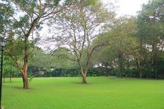 Großer Baum auf einem Boden umfasst mit grünem frischem Gras Stockfotos