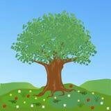 Großer Baum auf Lichtung mit Blume Stockfoto