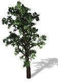 Großer Baum auf weißem Hintergrund lizenzfreie abbildung