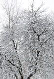 Großer Baum bedeckt mit Schnee in einem Park Lizenzfreie Stockbilder