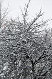 Großer Baum bedeckt mit Schnee in einem Park Stockfoto