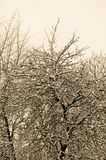 Großer Baum bedeckt mit Schnee Retro- Art Lizenzfreie Stockfotografie