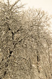 Großer Baum bedeckt mit Schnee Retro- Art Stockbilder