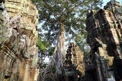 Großer Baum bei Angkor Wat Lizenzfreie Stockfotografie