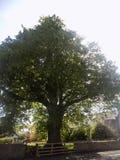 Großer Baum in Crookham Northumerland, England Großbritannien Lizenzfreie Stockfotografie