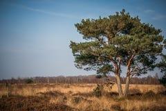 Großer Baum in der Sonne Lizenzfreies Stockbild