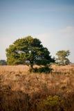 Großer Baum in der Sonne Stockfoto
