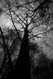 Großer Baum des Schattenbildes im Wald Stockfotos