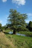 Großer Baum durch den Fluss bei Eynesford in Kent Lizenzfreie Stockfotos