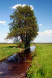 Großer Baum durch einen Abzugsgraben auf den Gebieten Lizenzfreies Stockfoto