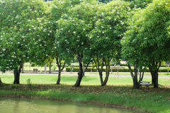 Großer Baum durch Seite der See im Park Stockfoto