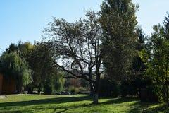 Großer Baum in einem Landhaus Ferien im Land lizenzfreie stockfotografie