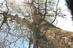 Großer Baum an einem sonnigen Tag Stockbilder