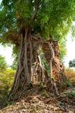 Großer Baum in einem tropischen Wald, Kambodscha. lizenzfreie stockfotografie