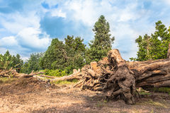 Großer Baum für Verkauf stockfotografie