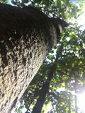 Großer Baum im Dschungel Lizenzfreie Stockfotografie