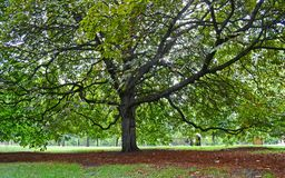 Großer Baum im Fell-Park, London 2013 lizenzfreie stockfotos