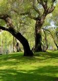 Großer Baum im Park Stockbilder