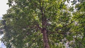 Großer Baum ist im schönen Garten, schattig, ruhig stockfotografie