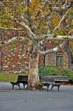 Großer Baum mit Bänke Stockfotografie